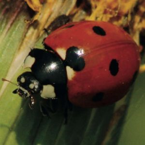 Abris pour animaux et insectes